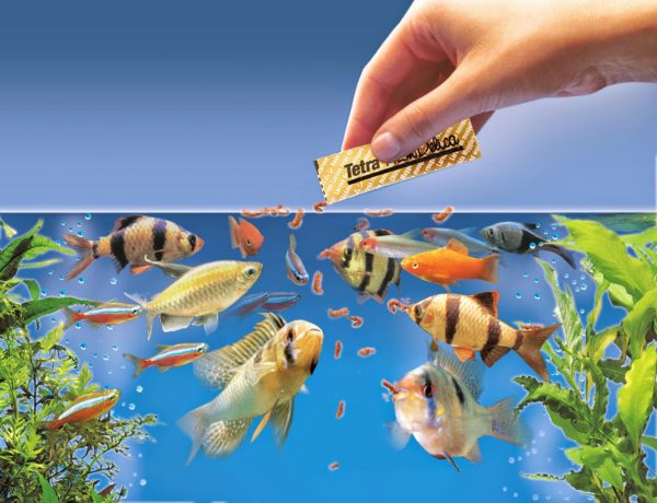 Top 4 Types Of Food For Ornamental Fish Fast Food Free