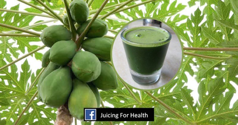 How you can benefit from Papaya leaf